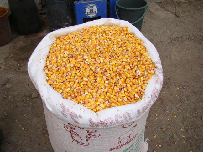 Buzau: Peste o tona de porumb boabe confiscat de catre politisti, in urma unui control in trafic