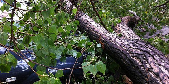 Două persoane au fost rănite la Câmpina, după ce un copac a căzut peste un autoturism aflat în mers