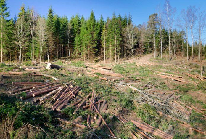 Doi foşti prefecţi de Buzău, condamnaţi definitiv la închisoare în dosarul retrocedării ilegale din pădurea Gura Teghii