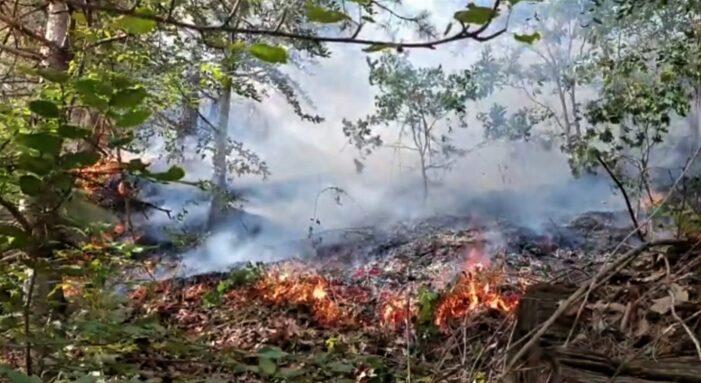 Pompierii buzoieni se luptă, de duminică, pentru stingerea unui incendiu izbucnit în pădurea de la Mânzălești