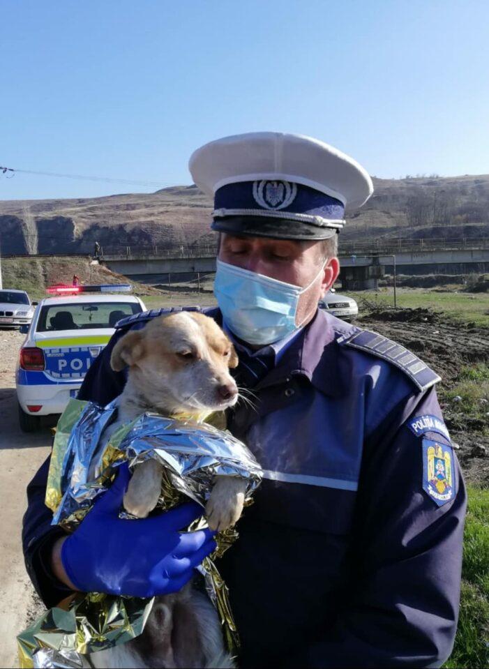 Un cățel a fost incendiat de doi adolescenți în Buzău